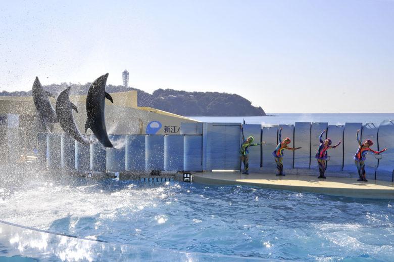 新江ノ島水族館でしか見れない8つのショープログラムの見所とは!?