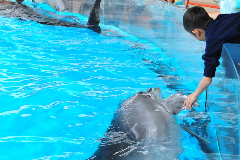 イルカと握手写真