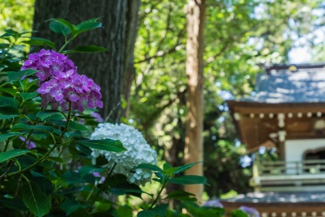 鎌倉で一足早い夏を感じに行こう♪紫陽花名所おすすめスポット7選