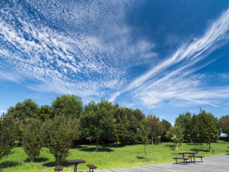 青空と緑の公園