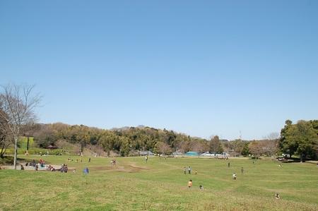 里山公園の芝生