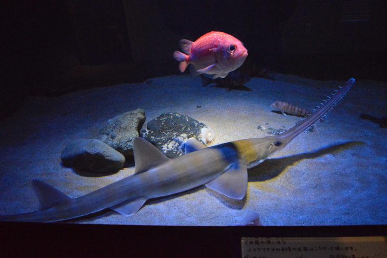 相模湾は深海魚の宝庫!珍しい深海魚がいっぱいの新江ノ島水族館の深海コーナー